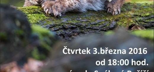 Setkání s rysem. Zdroj: ekocentrum.cz
