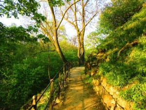 Cesta v zadní části zahrady zámku v Mníšku pod Brdy, foto: Bc. Anna Čelouchová